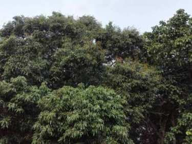 ขายที่ดิน เมืองปราจีนบุรี เป็นสวนผสม สวนผลไม้ บนพื้นที่ 3 ไร่ 1 งาน 86 ตร.ว. เงียบสงบ บรรยากาศดี ร่มรื่นด้วยผลไม้